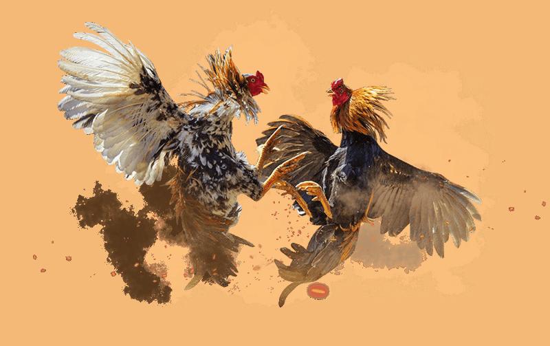 Cock Bg New